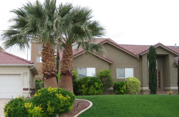 California-palm-trees.jpg