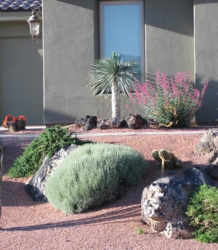 Yucca restrata
