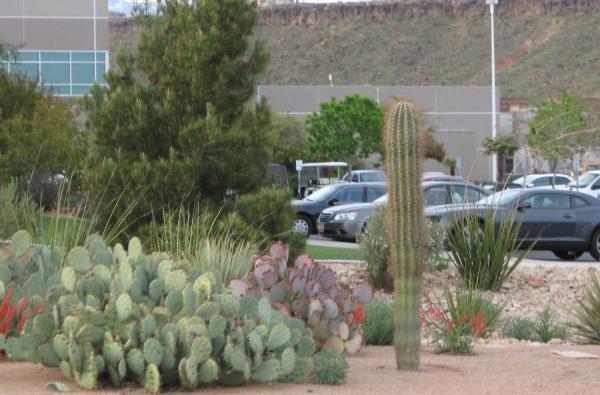 desert-landscaping-ideas