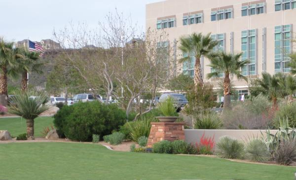 desert landscape with lawn