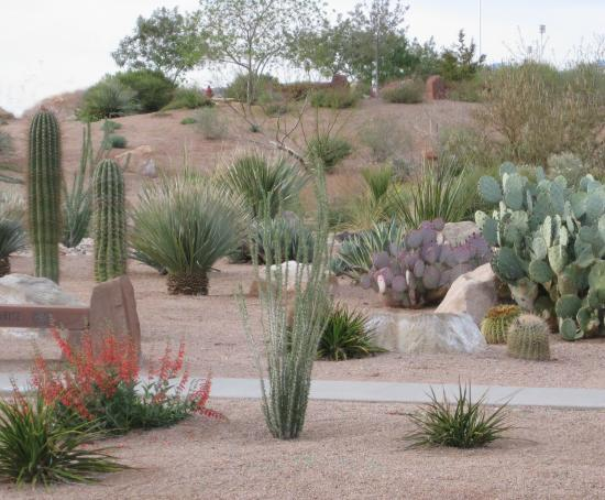 Desert landscape design ideas