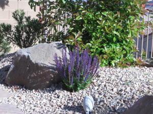 Purple-Salvia.jpg