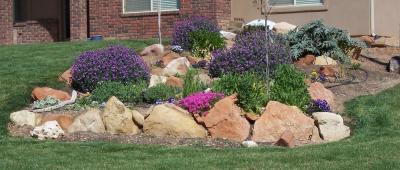 cororful flower garden