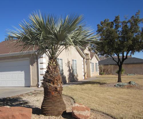 mexican-blue-palm.jpg