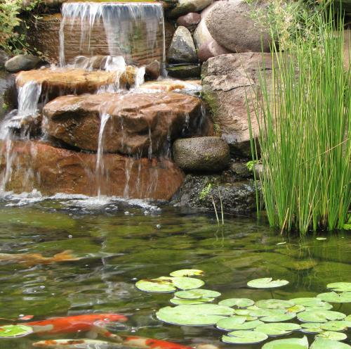 water fall and koi pond