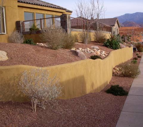 cactus landscape ideas native home garden design