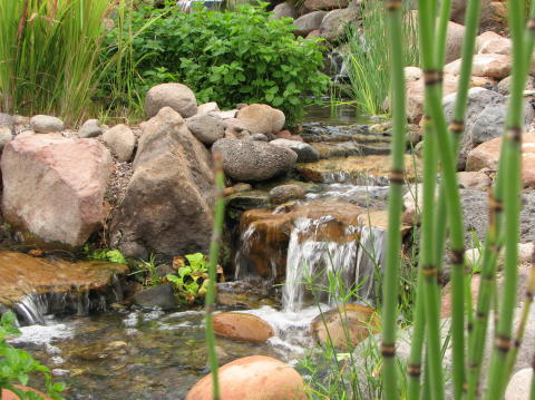 water plants in a stream
