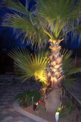 Palm Trees w/ Lighting