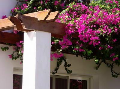 pergola with flowers