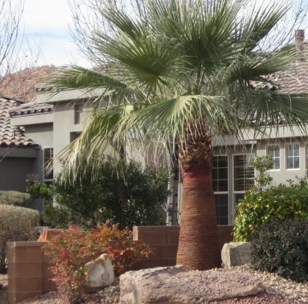skinned palm tree